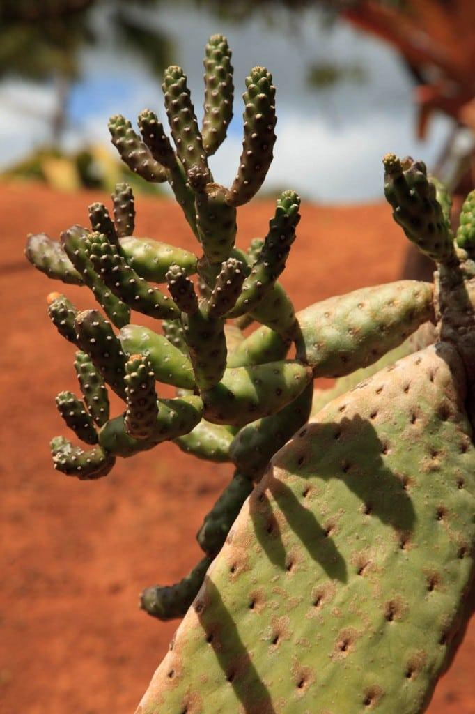 Cactus in paradise