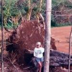 xx iniki damage forest